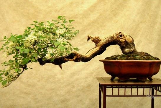 درخت کج را نمیتوان صاف کرد؟