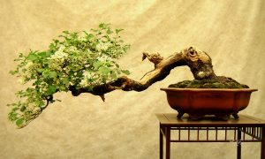 درخت کج را میتوان صاف کرد؟